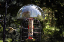 Squirrel Dome and Feeder Shelter