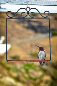 Flat Black Hummingbird Swing