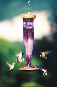Amethyst HumBird Lantern