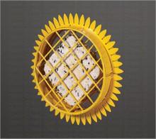 Suet Sunflower Hanging Fdr