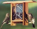 Chickadee Pine Cone Teahouse