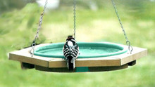 Mini Hanging Bird Bath Green