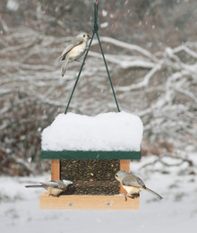 Little Looker Bird Feeder