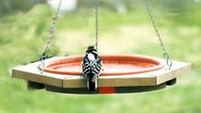 Mini Hanging Bird Bath Clay Tray