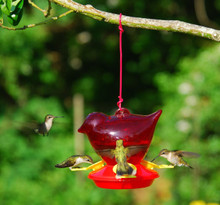 Red Bird Hummingbird Feeder