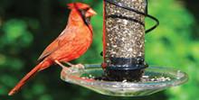 Clear Screw-On Seed Tray(Fits all Songbird Essentials BirdQuest feeders)