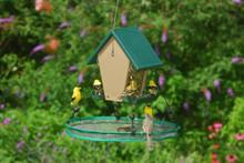 Seed Hoop 16 in SeedHoop