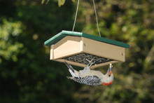 Small Upside Down Suet Feeder Hunter Driftwood