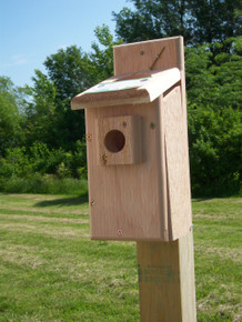 Bluebird Box Screen Top