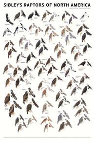 Sibleys Raptors N. America Poster