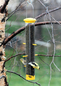 Tails Up Finch Feeder