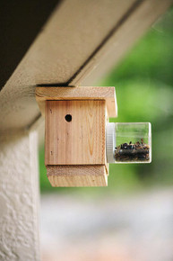 Hanging Carpenter Bee Trap
