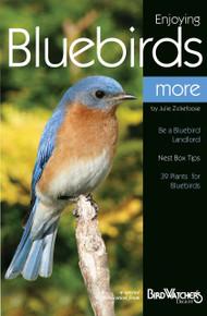 Enjoying Bluebirds More