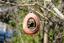 Egg Fly Through Birdfeeder Red
