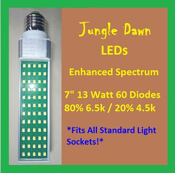 Jungle | Dawn | 7 | Inch | 13 | Watt