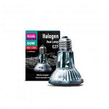 50 Watt Halogen Bulb 110v