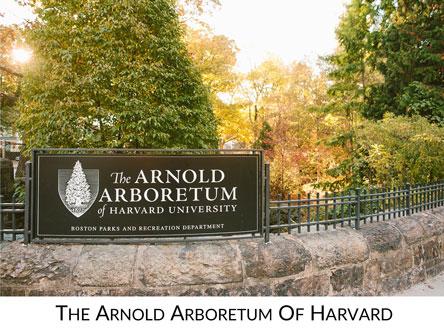 Arnold Arboretum Icon