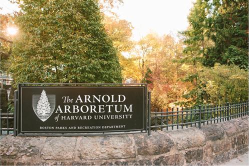 arnold-arboretumwoodsource.jpg