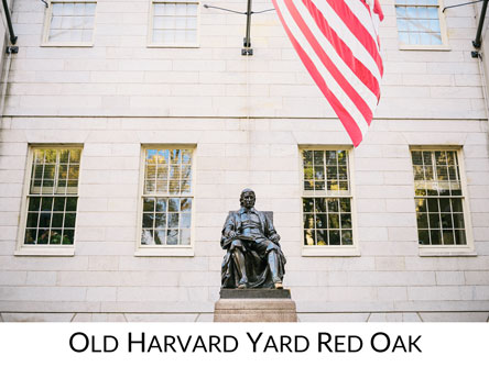 Old Harvard Yard Red Oak Icon
