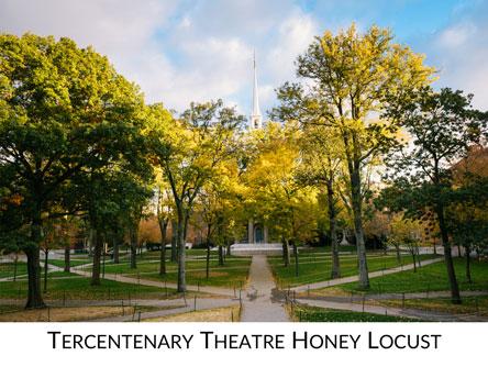 Tercentenary Theatre Icon