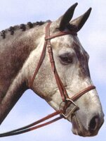 Passport Plain Raised Bridle