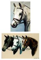 Janet Griffin-Scott Pony Magnets