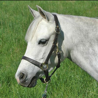 Camelot Pony Turnout Halter In 4 Sizes