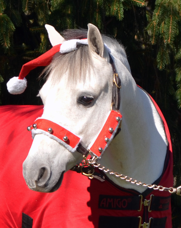 Christmas Horse Pictures.Holiday Horse Wear Halter Set With Bells
