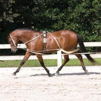 Pessoa Training System - Pony