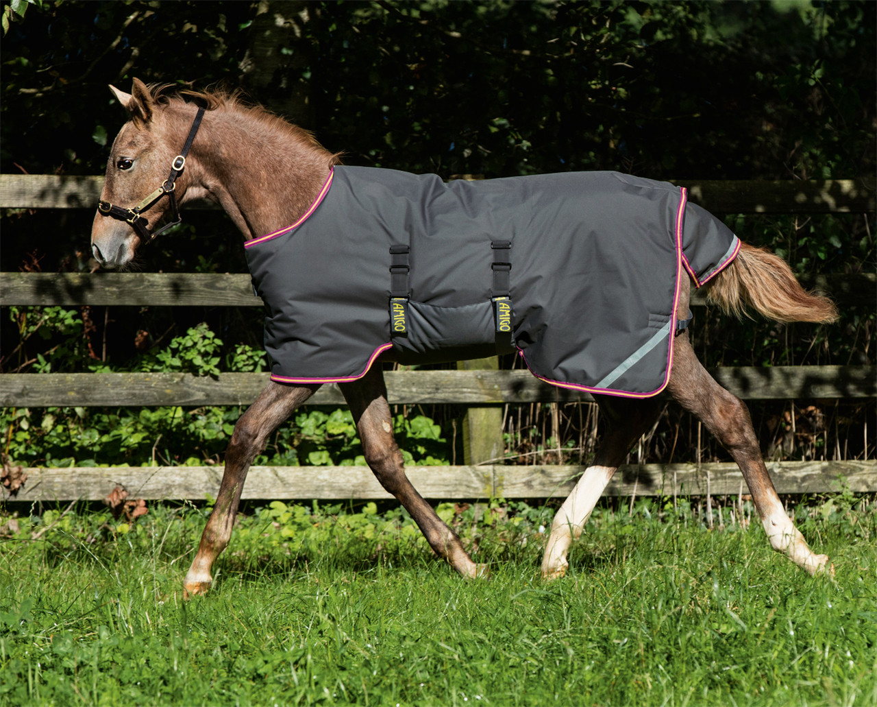 Amigo Foal Mini Turnout Blanket Excalibur Purple Yellow