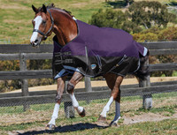 "Weatherbeeta Comfitec Plus Medium Turnout, Purple/Black, 48"" - 69"""