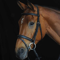 Collegiate Comfort Crown Padded Raised Bridle with Flash, Pony & Cob
