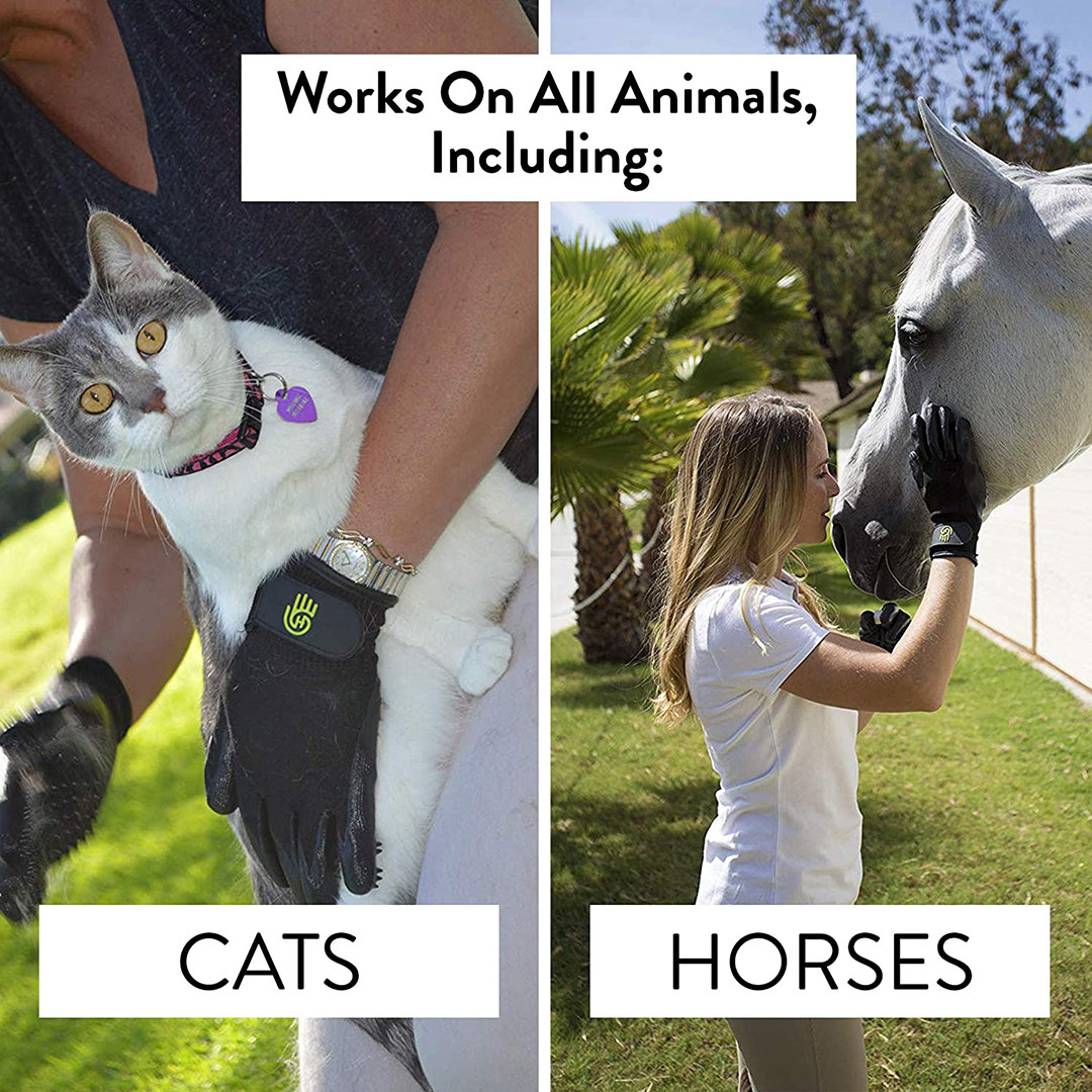 Cats and Horses