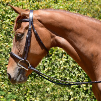 Bobby's Fairhaven Fancy Padded Bridle with Laced Reins, Small Pony, Pony & Cob