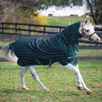 "Amigo Pony Plus, 50g Turnout Blanket, 45"" - 69"""