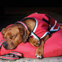 Horseware Amigo Waterproof Dog Blanket, Red with White/Green/Black
