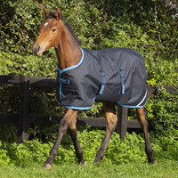 "Amigo Foal / Mini Turnout Blanket, Navy/Electric Blue,  30"" - 60"""