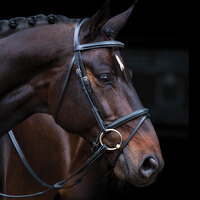 Amigo Deluxe Padded Pony Bridle with Flash Noseband, Black or Brown