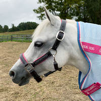 Belle & Bow Pink Padded, Fancy Stitched Halter , Small Pony, Pony & Cob