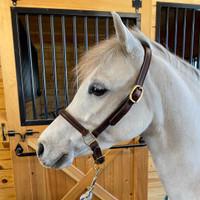 Leather Grooming Halter, Pony & Cob