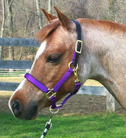 Padded Nylon Breakaway Halter Pony & Cob Sizes