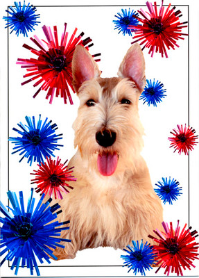 Scottie Independence Day
