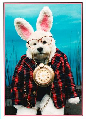 Westie the Rabbit Birthday Card