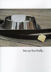Collar and Bowl Dog Sympathy Card