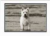 """Wading for You"" Westie Card"