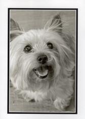 "Westie ""Happy"" Photo Card"