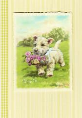 Sunrise Wheaten Puppy Card