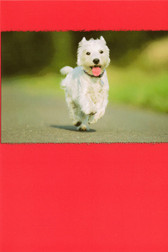 "Westie ""Help is on the Way"" Card"