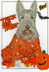 Trick or Treat Scottie Card
