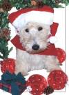 Spencer's Christmas Card